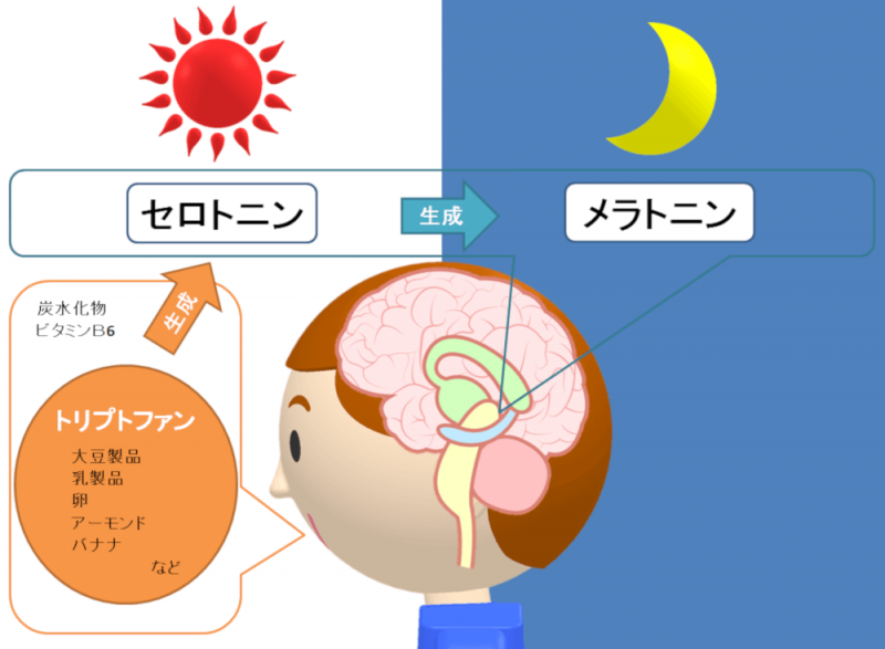 sleep-hormone-flow