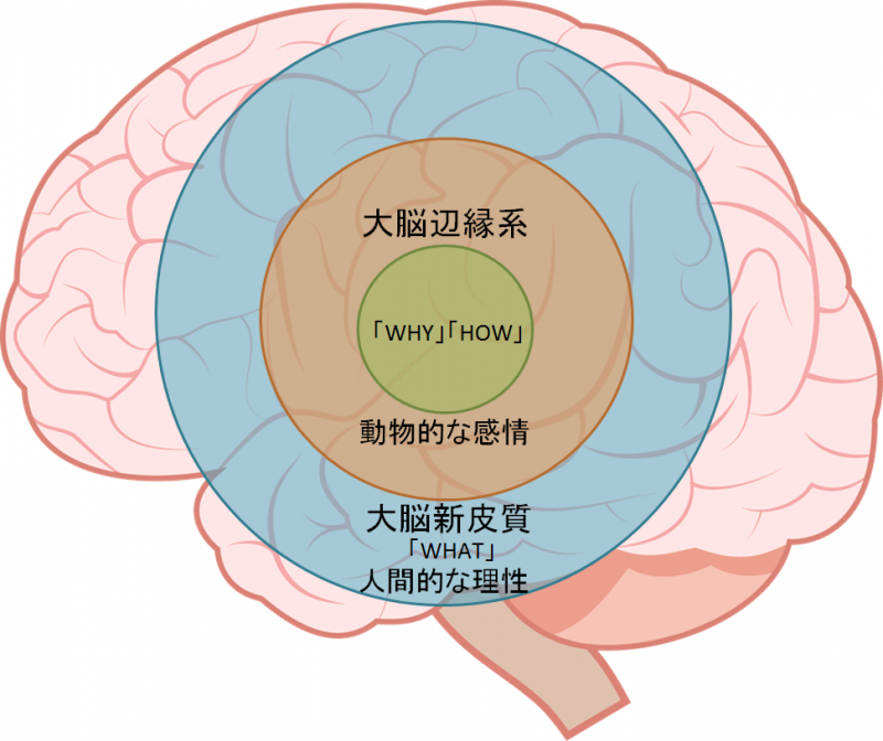 the-golden-circle-theory-and-the-brain